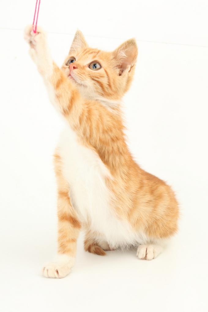 Как назвать котёнка-мальчугана