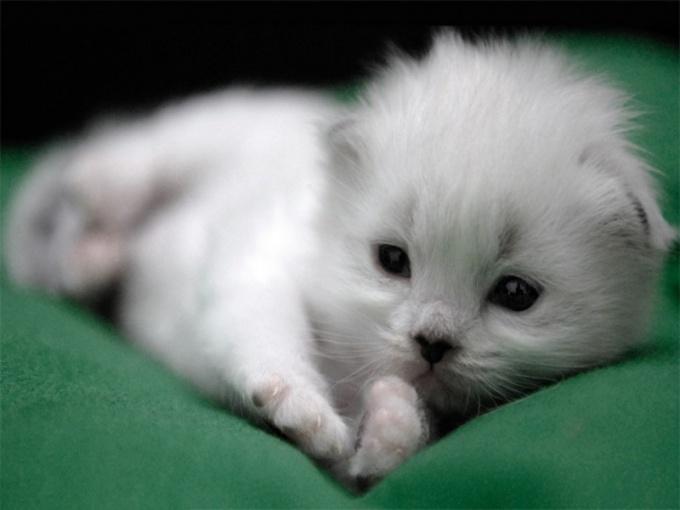 имя для кота мальчугана белого
