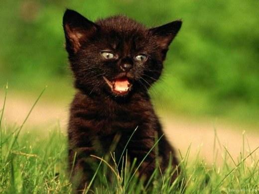 как назвать мохнатого котенка мальчугана