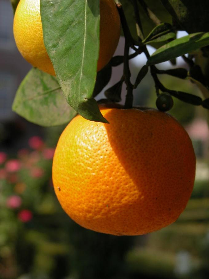 Как вывести пятнышка от апельсина