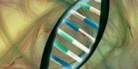 Как решать генетические задачи по биологии